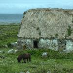 アラン諸島の馬 Aran islands, Ireland