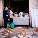 魚を待つ猫 Alexandria, Egypt