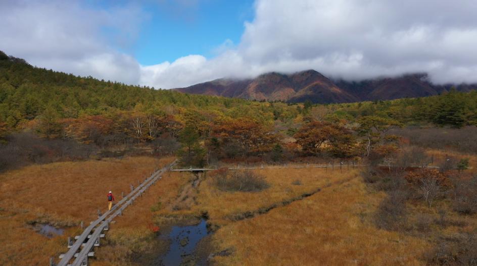 草紅葉の沼ッ原湿原